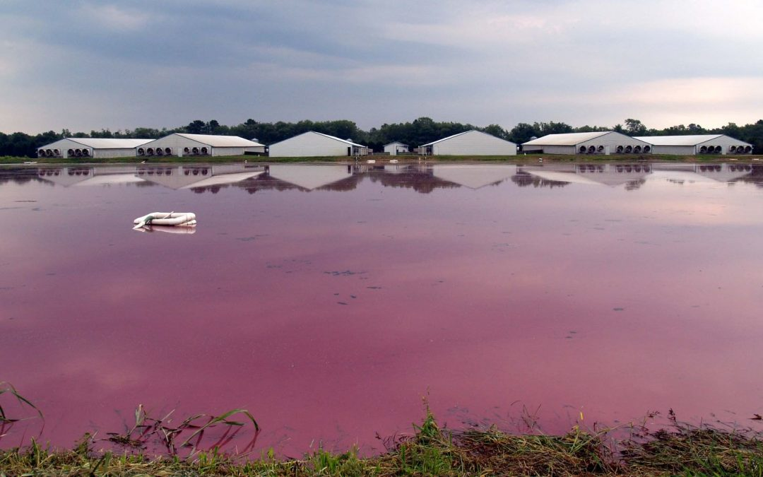 """""""You don't see many Hog Farms near the Country Club"""": What is environmental racism and why is it critical to safeguarding?"""